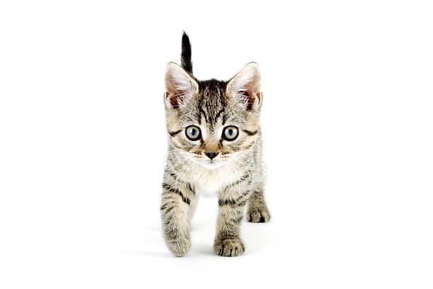 Grey tabby kitten with grey eyes picture id171262609?b=1&k=6&m=171262609&s=612x612&w=0&h=wf qptq3ywrvaynh4j hfptg gbs50gjnyslmijh9jo=