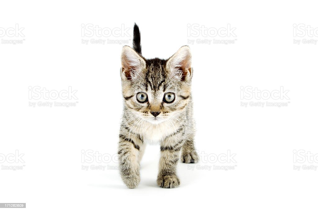Grey tabby kitten with grey eyes stock photo