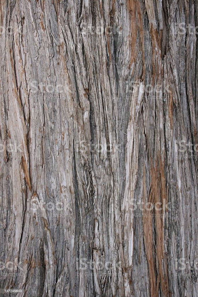 grey-brown lineated bark stock photo