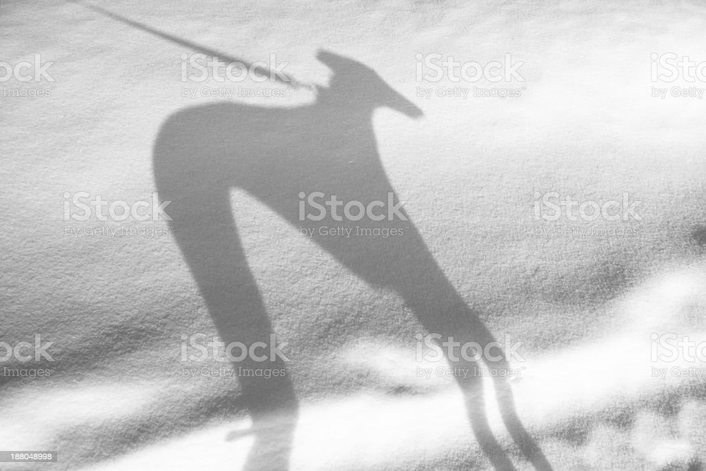 Greyhound shadow on snow stock photo
