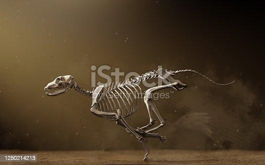 Greyhound skeleton running on dirt track, anatomically correct bone structure and pose