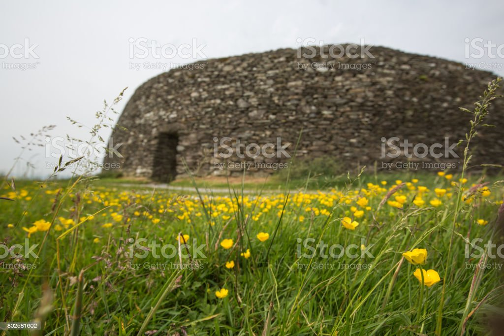 Grianan of Aileach in Donegal, with buttercups stock photo