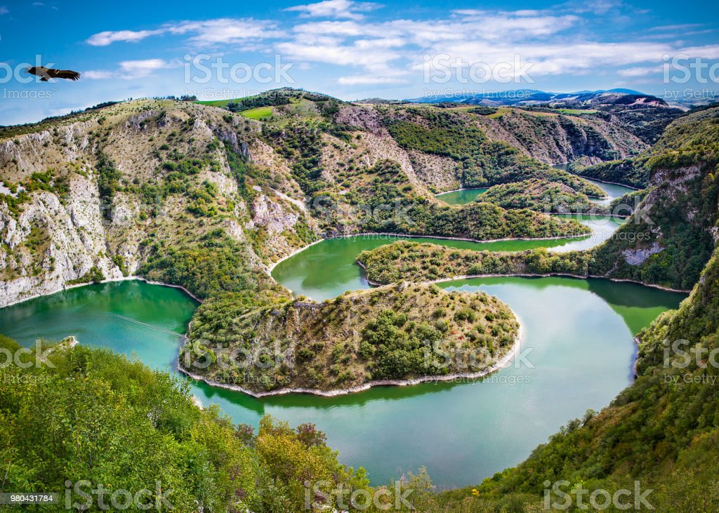 Griffon vulture flying over meanders of Uvac river in Serbia. royalty-free stock photo