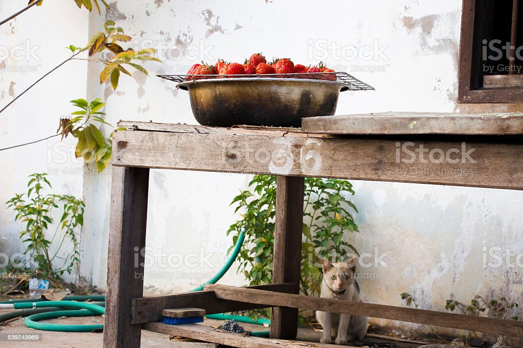 Grill tomato and hiding cat royalty-free stock photo