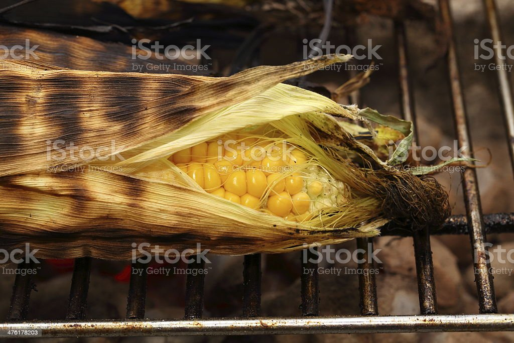 Grilled corn on the cob - maize and barbecue grill royalty-free stock photo