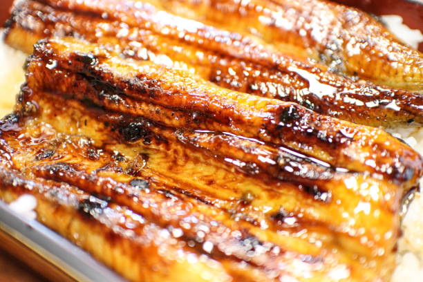 grilled eel and rice - peixe na grelha imagens e fotografias de stock