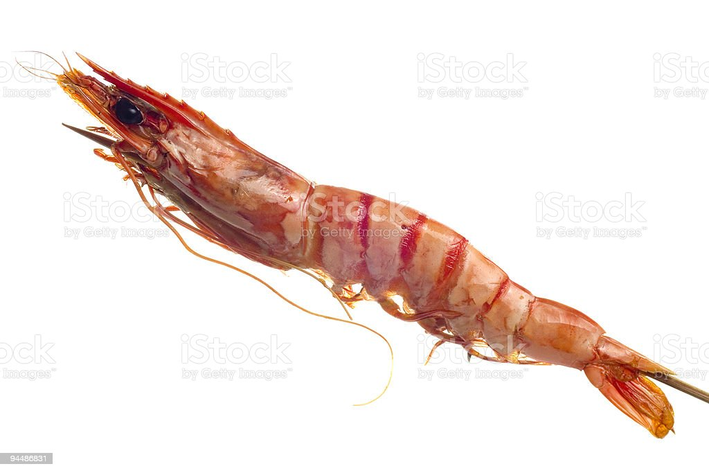 Grilled tiger prawn on a skewer royalty-free stock photo
