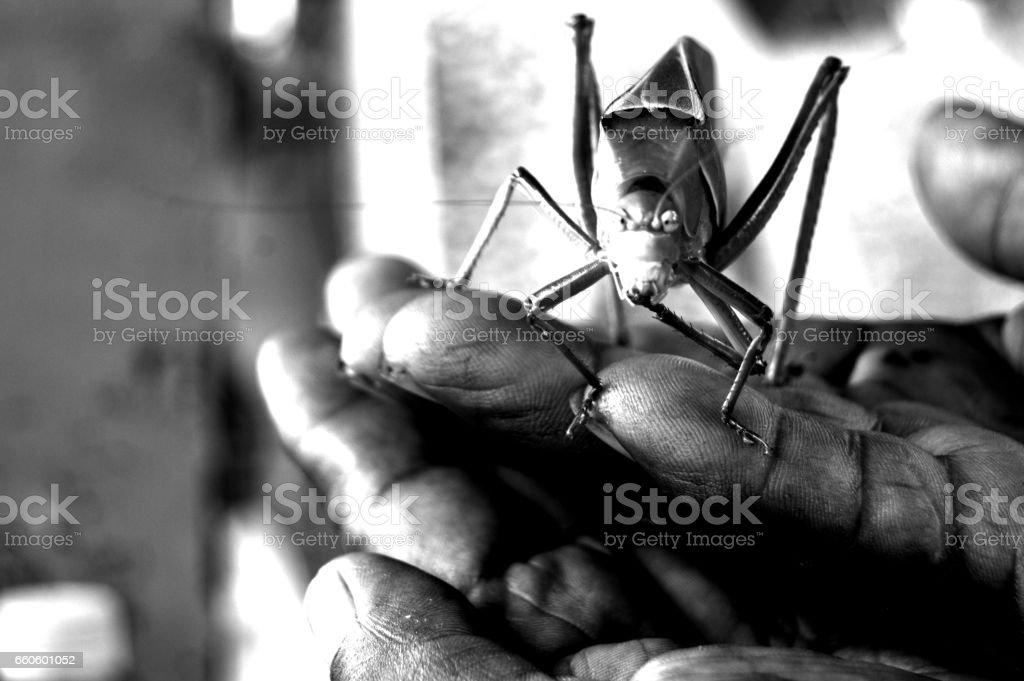 Grillo y manos stock photo