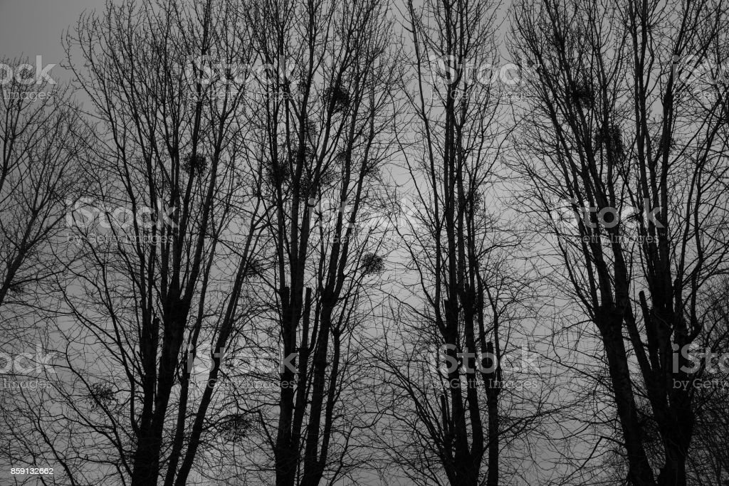 Grim landscape - trees and nests against the background of the night sky stock photo