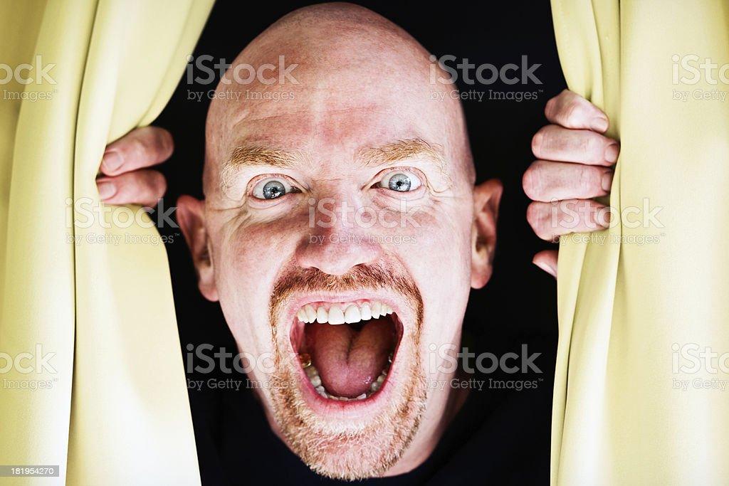 Grimacing madly, bald man looks through drapes. Halloween horror! stock photo