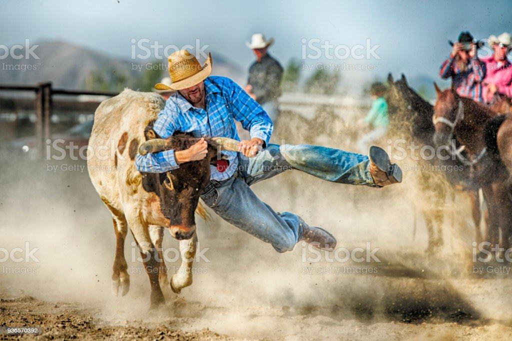 Graveleuse Cowboy difficile pendant le Steer Wrestling Competition accrochée à une terre oriente cornes où il s'apprête à contrôler et l'amener au sol - Photo