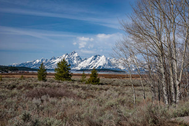 grizzly bear country in grand teton national park - montana western usa stock pictures, royalty-free photos & images