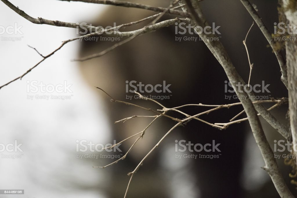 Grizzly Bear defocused background stock photo