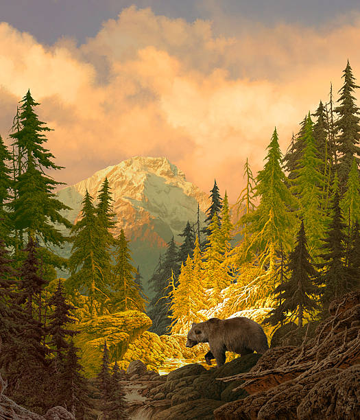 Grizzly Bear in the Rocky Mountains stock photo