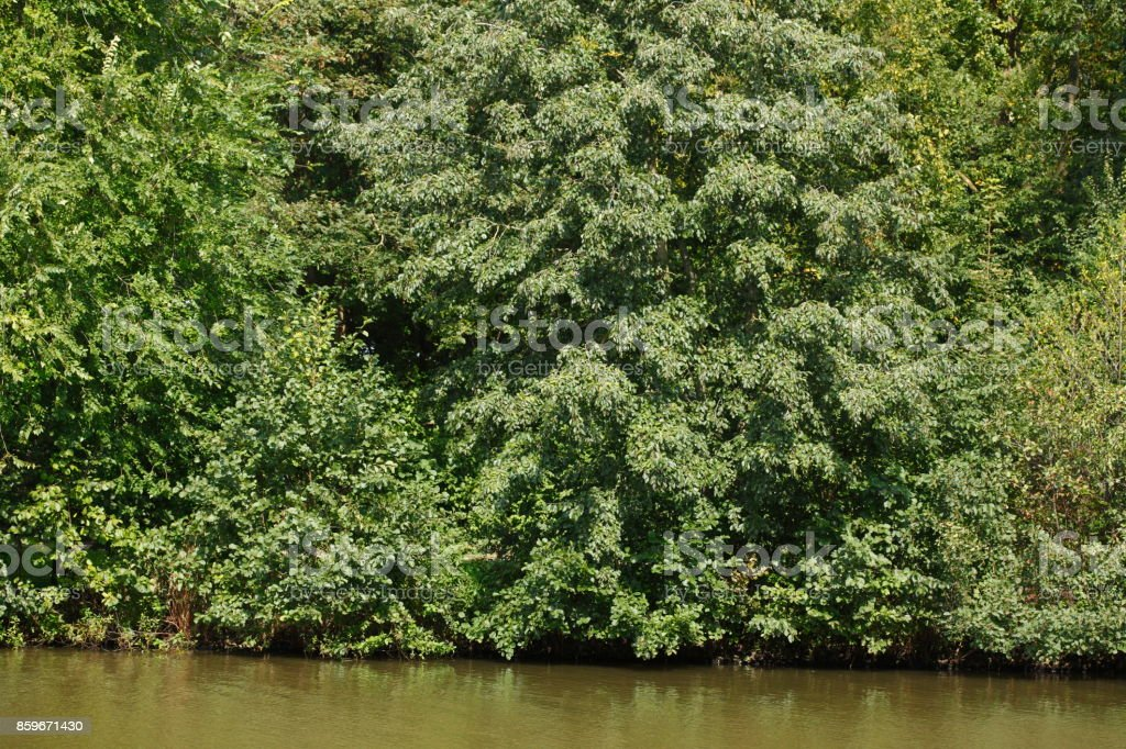 Grüne Bäume an einem Seeufer stock photo