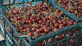 Grocery market. Red cherries in boxes