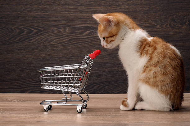 Grocery supermarket trolley and kitten stock photo