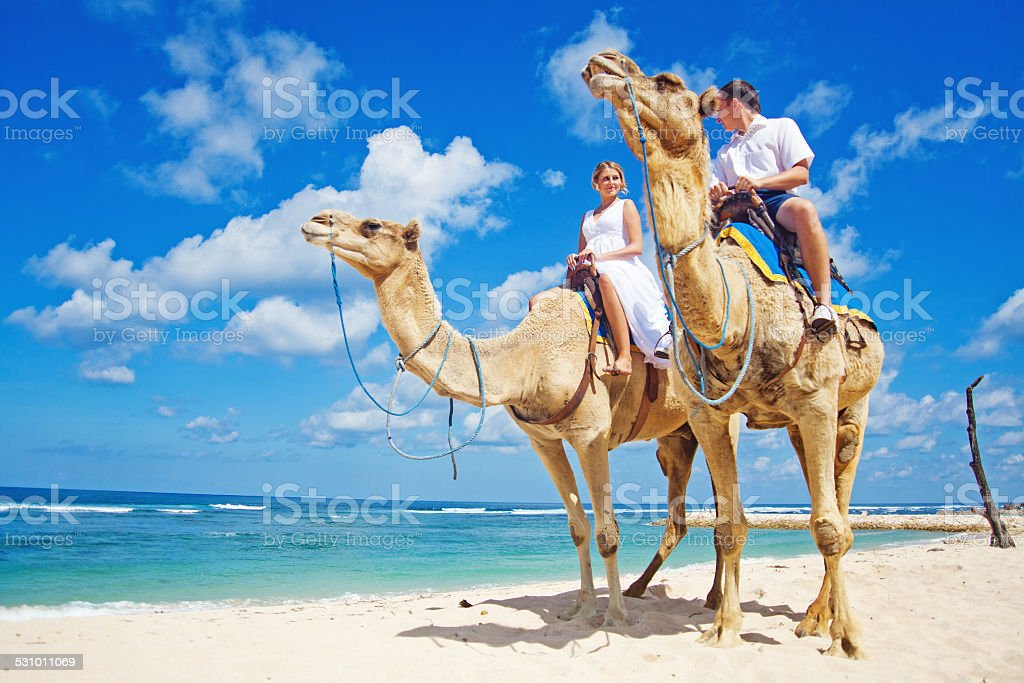 Groom and his bride riding camels on the beach stock photo