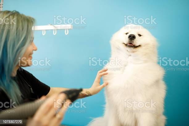 Groomer drying dog in pet salon picture id1073307270?b=1&k=6&m=1073307270&s=612x612&h=vpb wkpl8yg36u7xl0esavr5is0f3yhvxy2wybbqzy4=