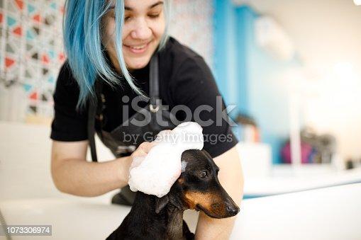 Groomer washing dog in pet salon