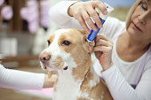 istock Groomer with a dog 468196912