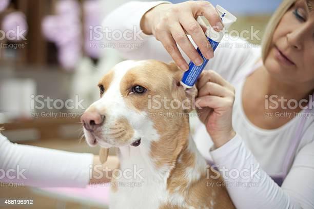 Groomer with a dog picture id468196912?b=1&k=6&m=468196912&s=612x612&h=dqibnpsweuptnktv6uma8do ozhmrioc s5t5uylx8u=