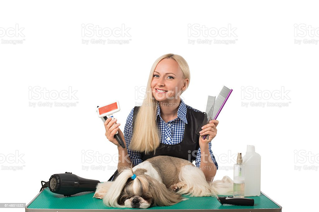 Groomer with combs and cute shih-tzu dog stock photo