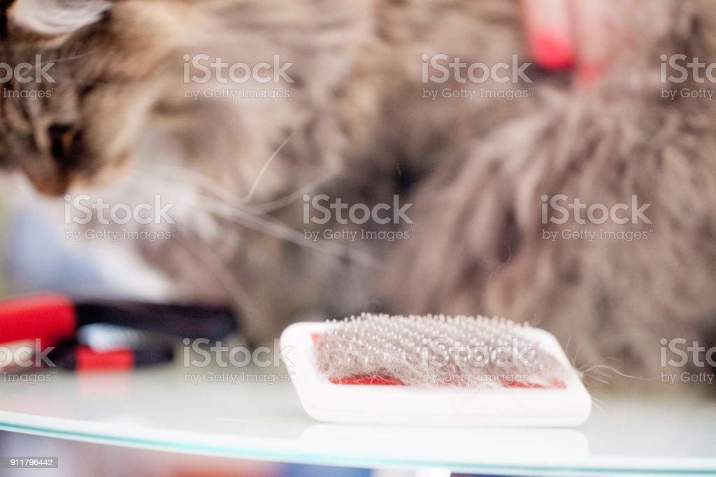 Grooming Brush Full of Cat\'s Hair, Cat in the Background