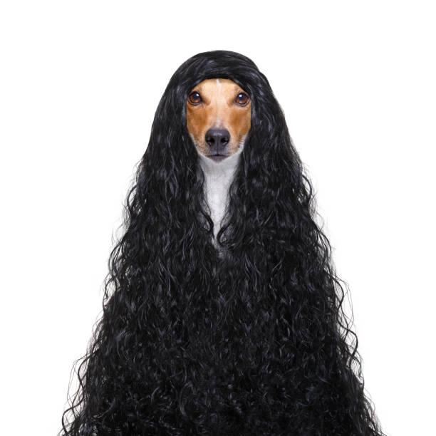 Pflegehund beim Friseur – Foto