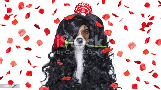 istock grooming dog at the hairdressers 638485272