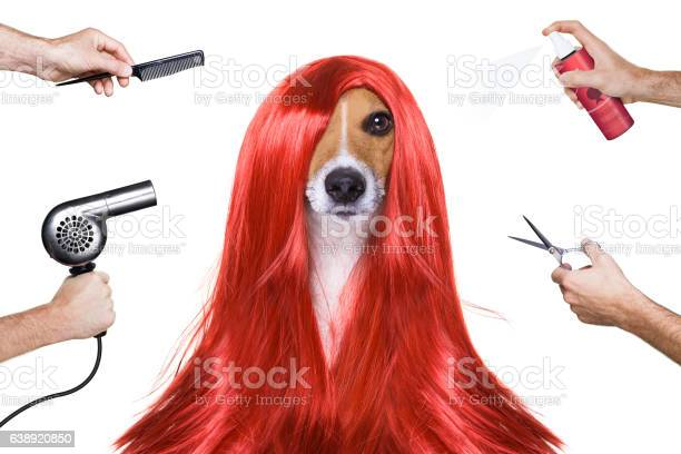 Grooming dog at the hairdressers picture id638920850?b=1&k=6&m=638920850&s=612x612&h=zkfz6qzbssdmgzsi1aykez9bux1rwpn8 klonfxtjec=