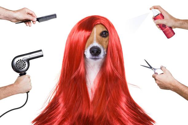 Grooming dog at the hairdressers picture id638920850?b=1&k=6&m=638920850&s=612x612&w=0&h=owpq1b7opowcod ngekx0bi78stfpubvf0mlgdymmka=