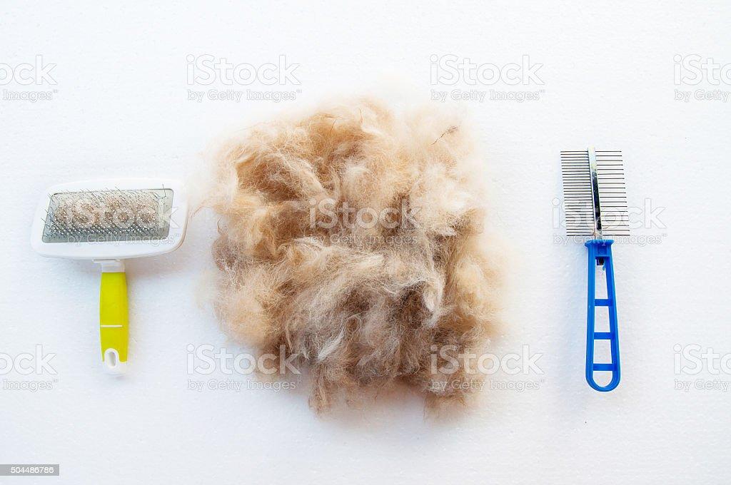 grooming dog hair stock photo