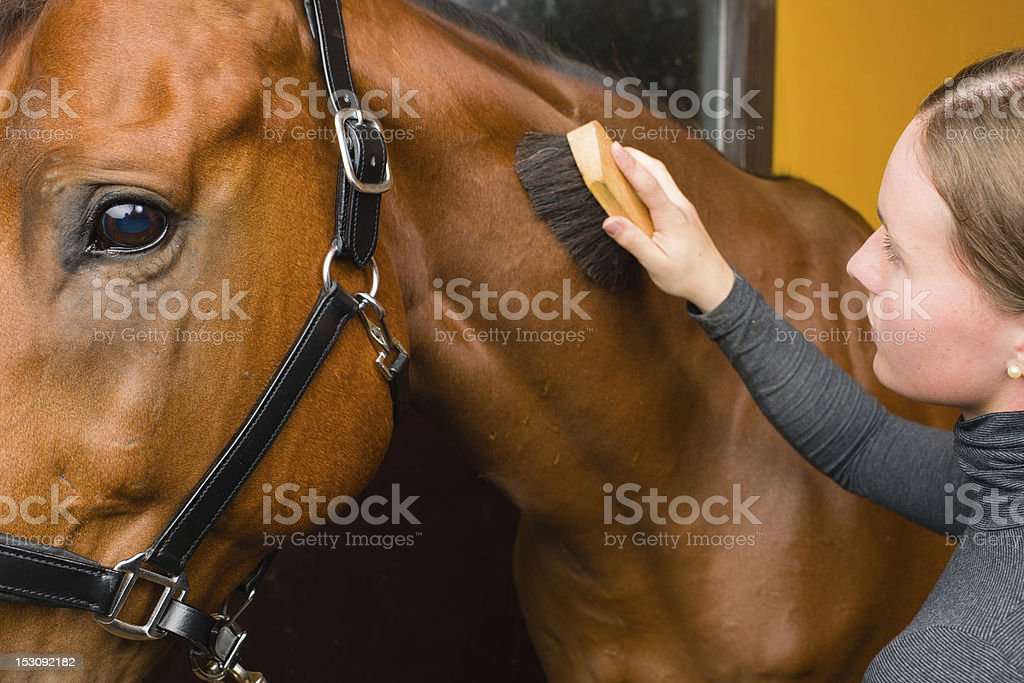Grooming horse stock photo