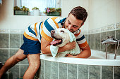 Dog, Taking a Bath, Washing, Animal Groomer, Pets