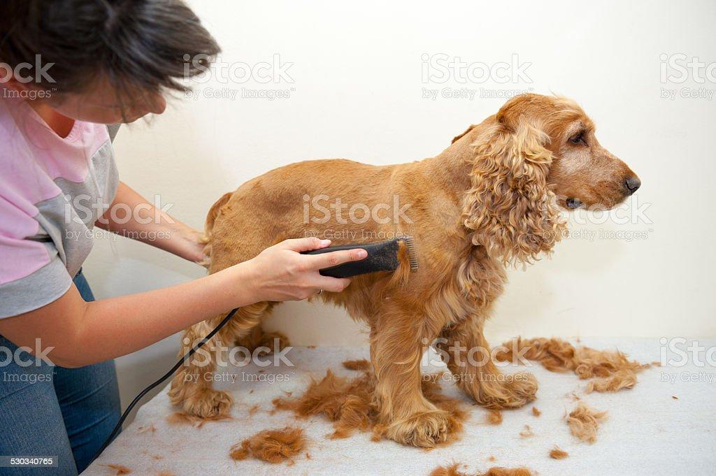 Grooming stock photo