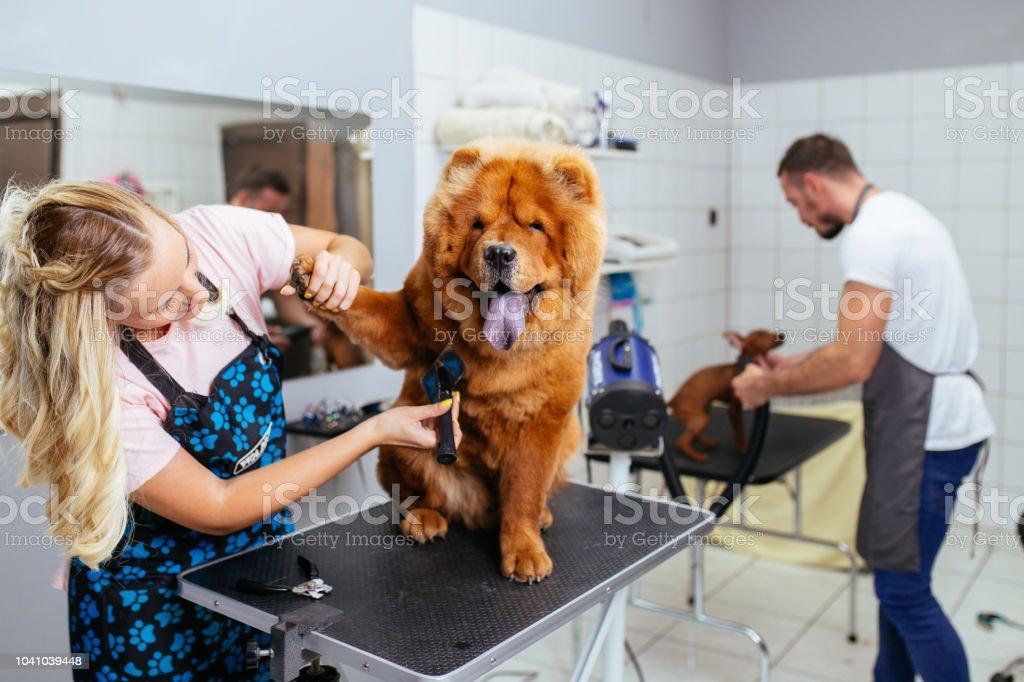 Grooming salon foto stock royalty-free