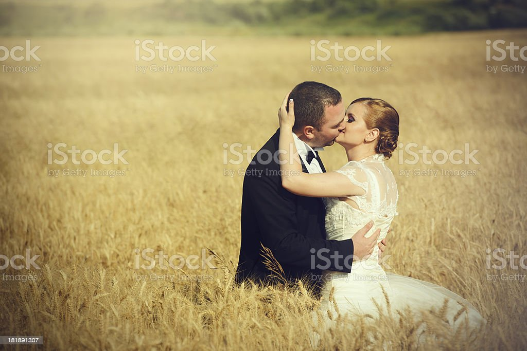 grooms kissing in corn field royalty-free stock photo