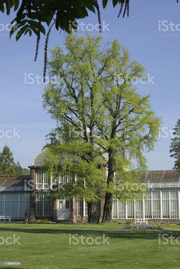 Grosses Gewachshaus Bergpark Wilhelmshohe Kassel Stock Fotografie Und