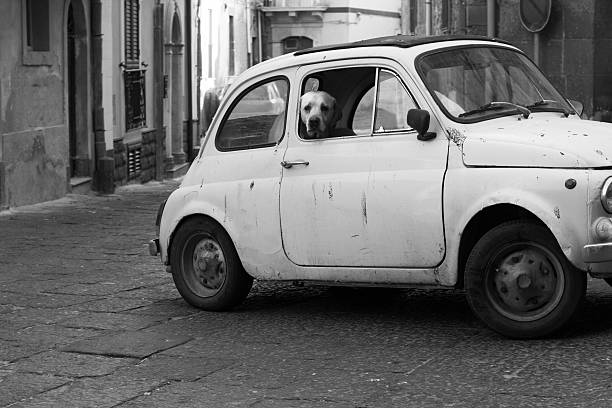 grotty vintage auto und dalmatinischen auf alten sizilianische piazza (b & w) - hundeplätze stock-fotos und bilder