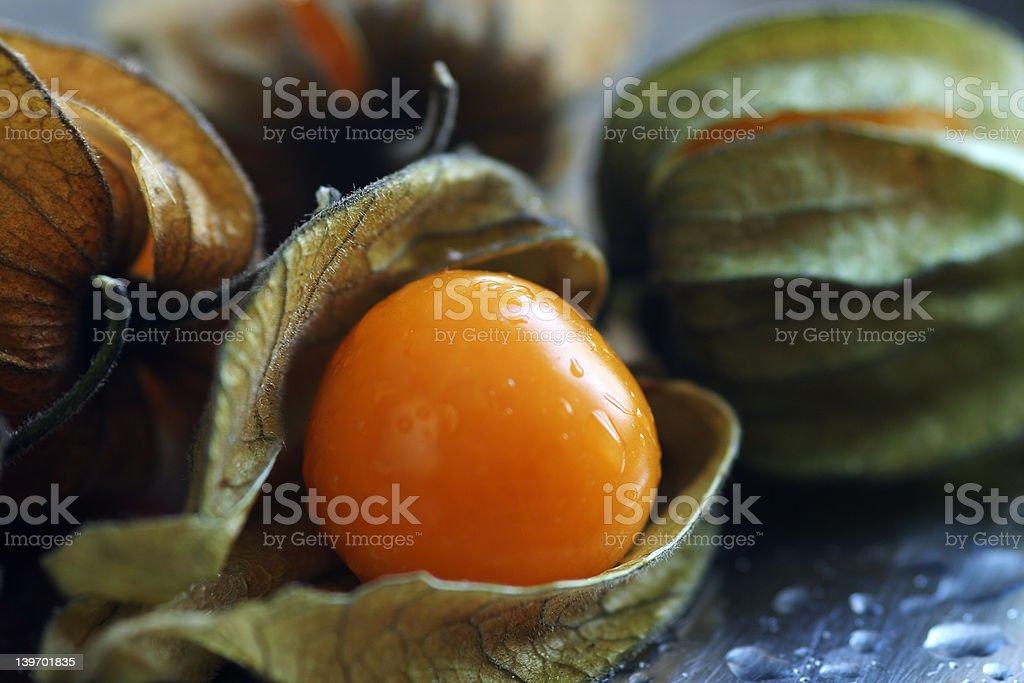Ground Cherry / Physalis pruinosa royalty-free stock photo