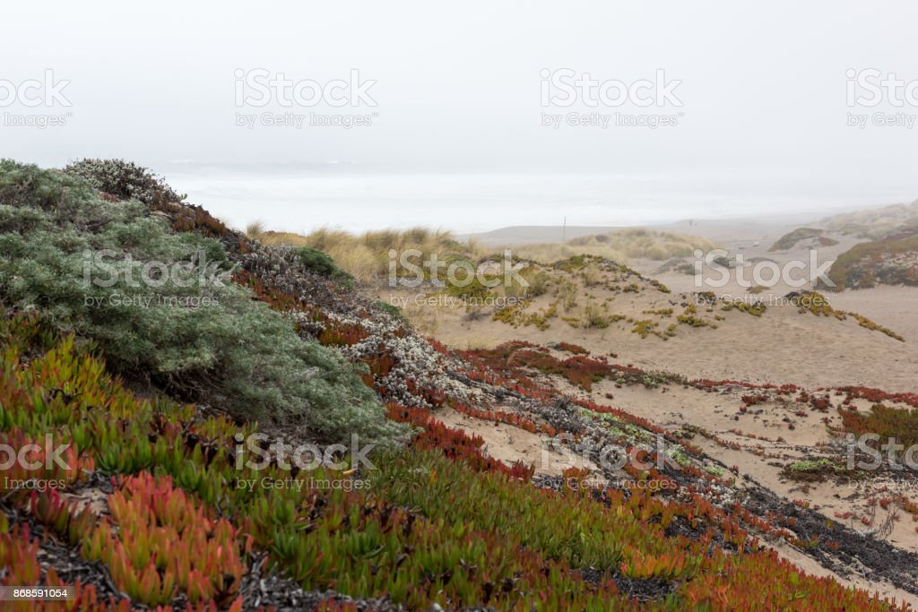 Ground Cover at Pt. Reyes South Beach stock photo