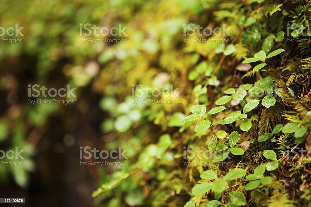 ground cover plants stock photo