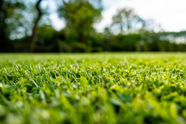 여름 비가 샤워 직후 본 최근 컷 고 잘 유지 장식적인 잔디의 지상 보기. - 비료 뉴스 사진 이미지