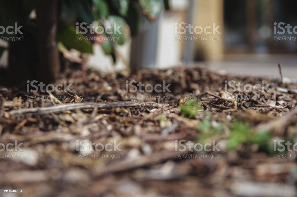 Ground royalty-free stock photo