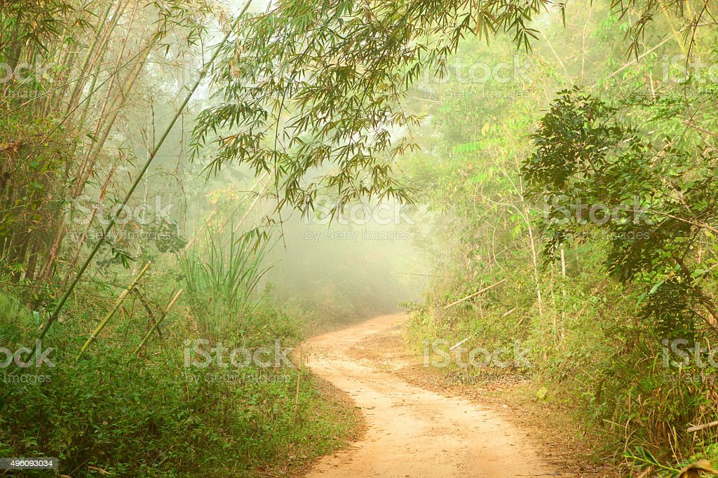 Ground road in jungle stock photo