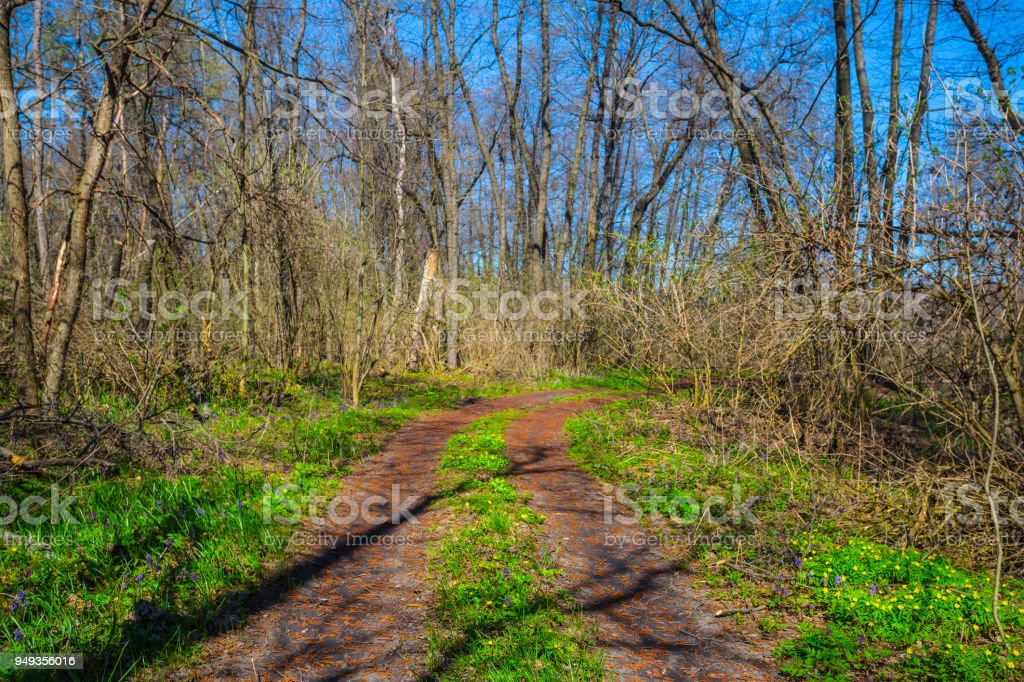 ground road through a fresh green spring forest stock photo