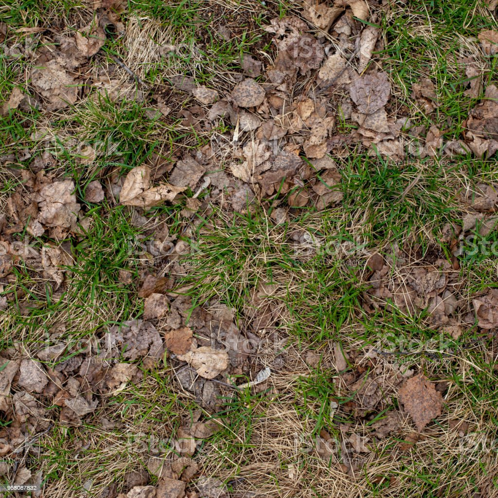 Ground texture with dry grass and small, rare tufts of green plants. Early spring after snow, soil, top view stock photo