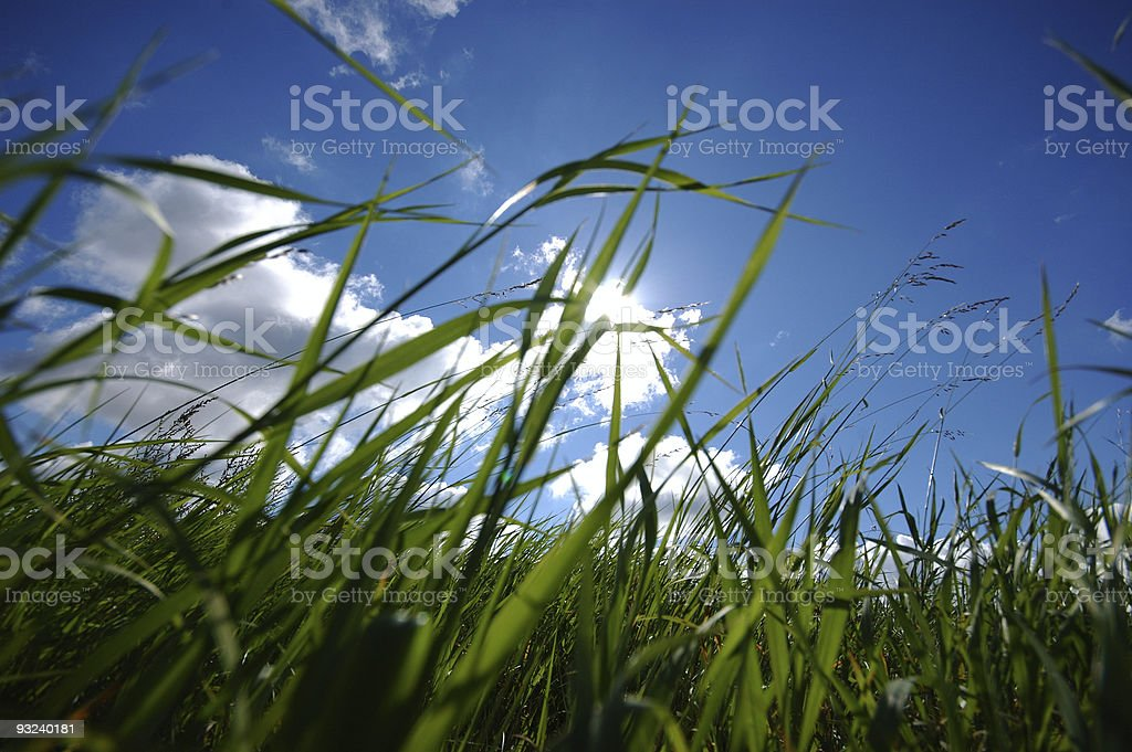 Ground view of grass in field on partly cloudy day stock photo