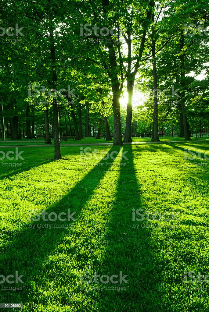 Ground view of sun setting through the trees in park stock photo